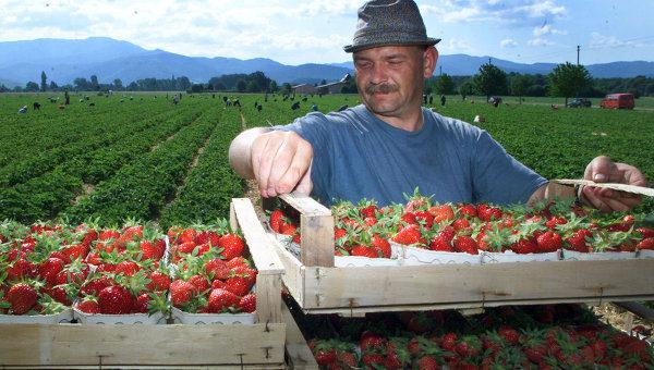 Бизнес на ягодах
