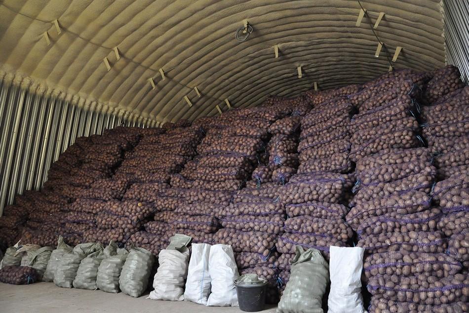 Актуальность бизнеса по выращиванию картофеля
