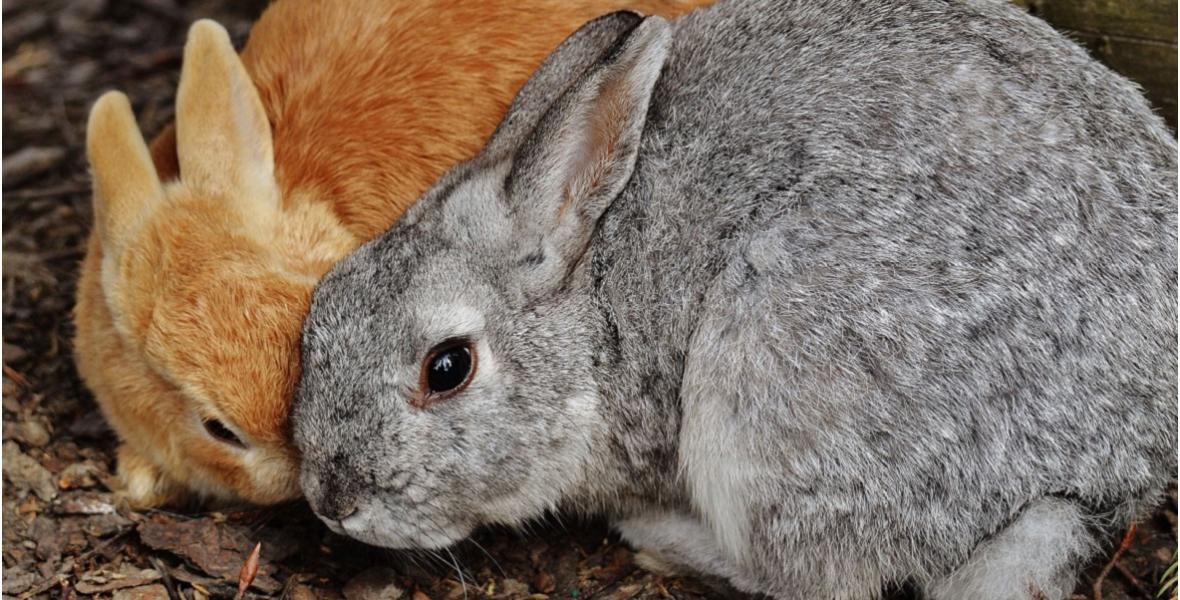 Бизнес по разведению кроликов