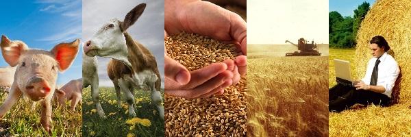 Бизнес идеи сельского бизнеса субсидия по бизнес плану